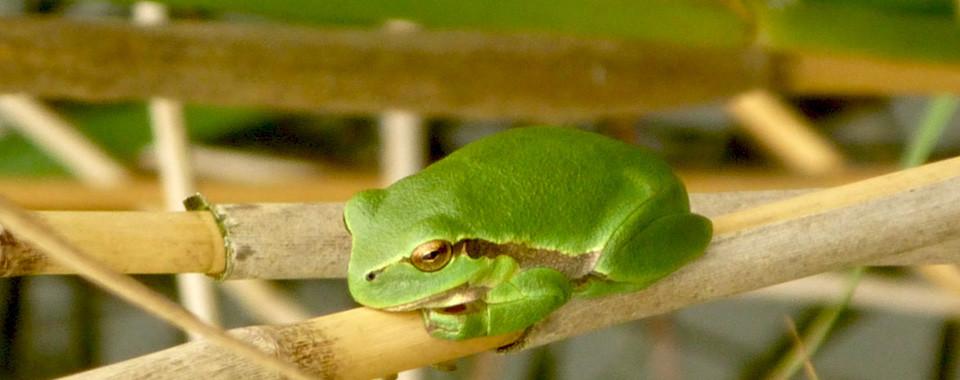 Schaalsee Spenden für die Artenvielfalt