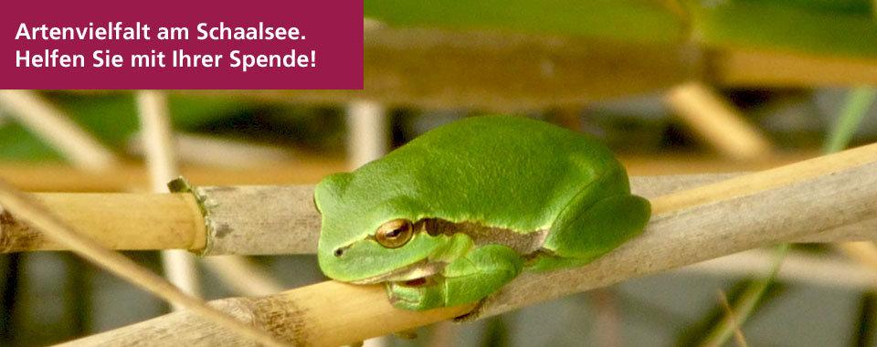 Artenschutz am Schaalsee. Bitte helfen Sie mit Ihrer Spende!