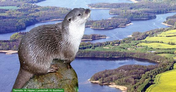 Der Fischotter. Fotomontage: Tiermotiv von Mathias Hippke, Landschaft von Wolfgang Buchhorn.