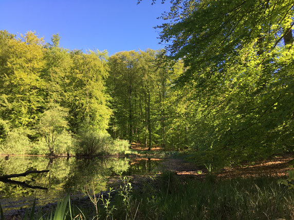 Der Testorfer Wald in Zarrentin. Foto: Frank Hermann