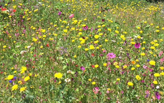Blühfläche in einem Privatgarten. Foto: Verena Burkhardt