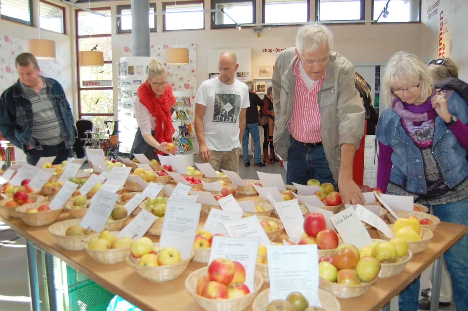 Foto: Apfelsortenausstellung von Jens Meyer im Informationszentrum PAHLHUUS. Fotoautorin: Susanne Hoffmeister