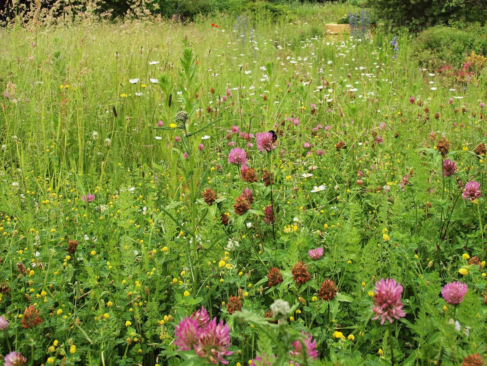 Foto: Blühfläche in einem Privatgarten. Fotoautor: Johann Hertel