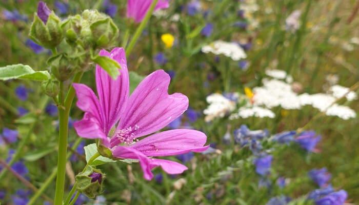 Blühflächen für Insekten